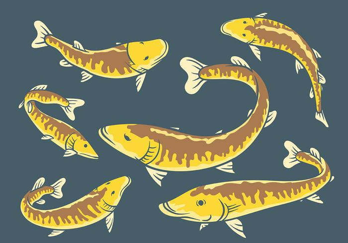 Muskie Vector Icons