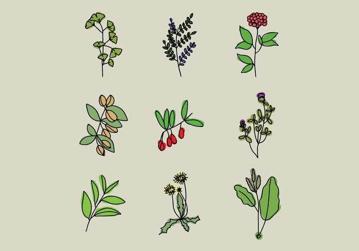 Remèdes à base de plantes médicinales