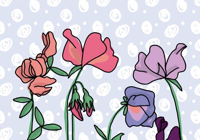 Sweet Pea Flowers Background