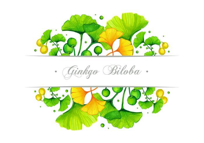 Ginkgo Banner Vector Design