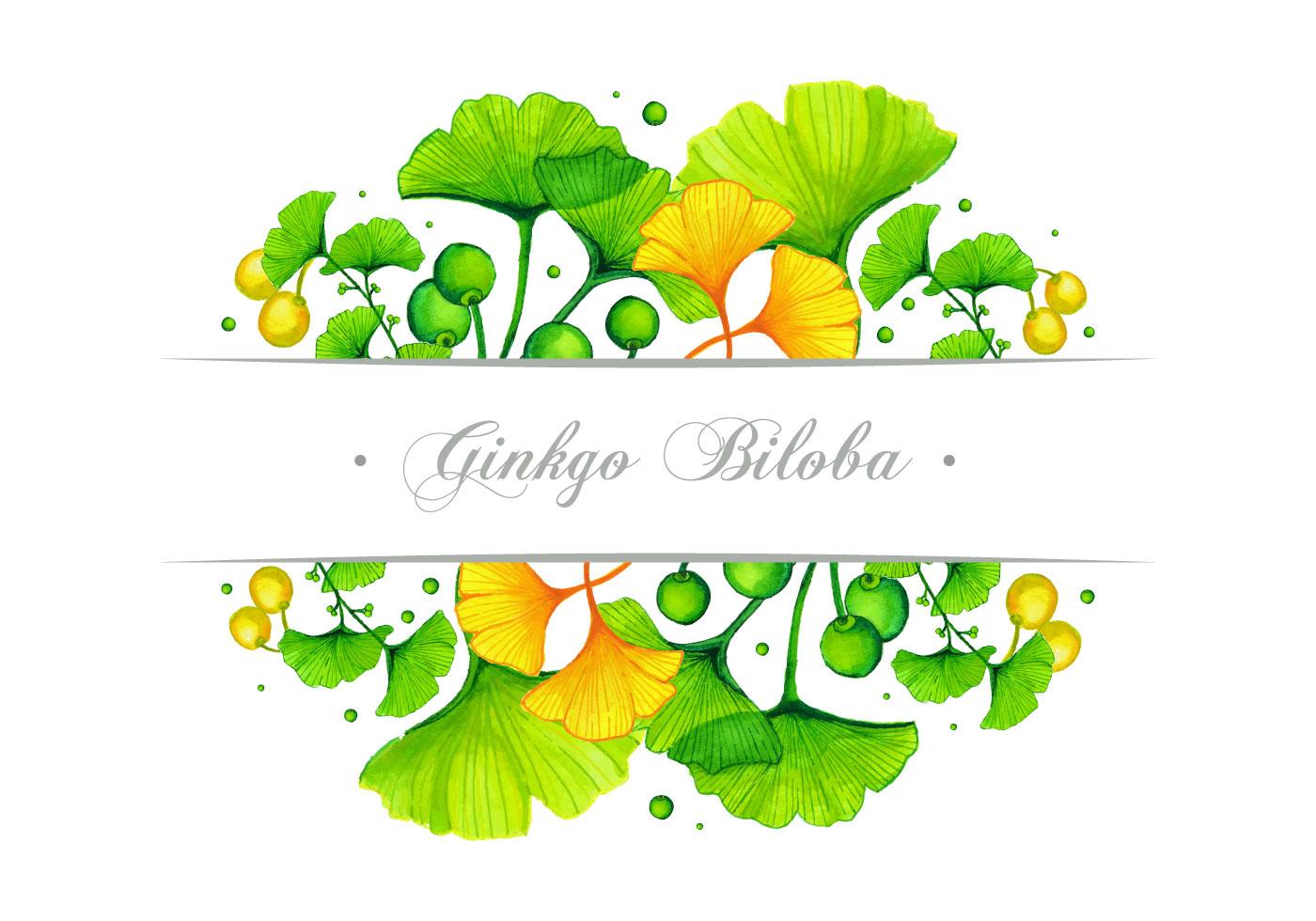 Ginkgo Banner Vector Design Download Free Vectors Clipart