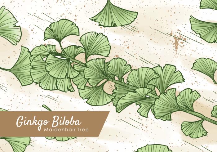 Free Hand Drawn Ginkgo Leaf