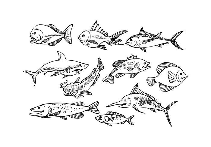 Vettore libero dell'icona di schizzo di pesce