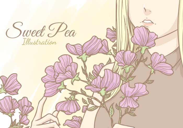 Sweet Pea Vector Illustration