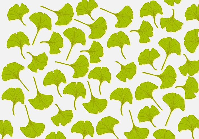 Fond d'écran Ginkgo Leaf