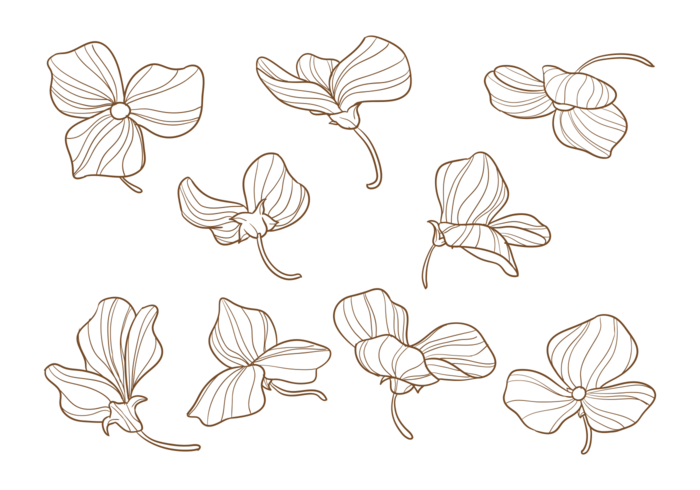 Flowers Vector Drawing Png: Hand Drawn Sweet Pea Flowers