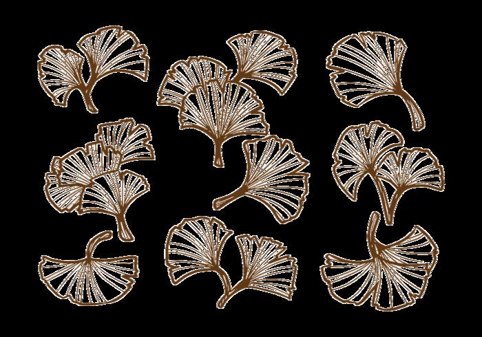 Feuille de Ginkgo dessiné à la main