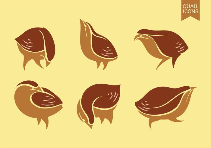 Conjunto de iconos gráficos vectoriales de codorniz