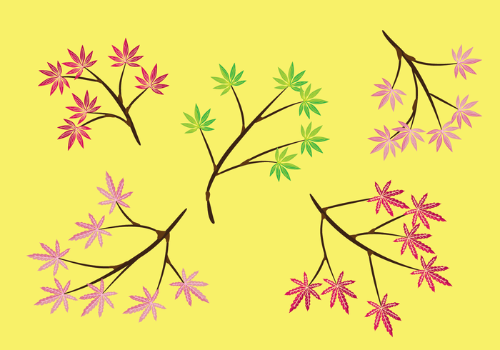 Japanese Maple Vector