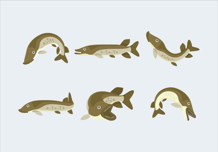 Wild Green Muskie Fish Vector Flat Illustration