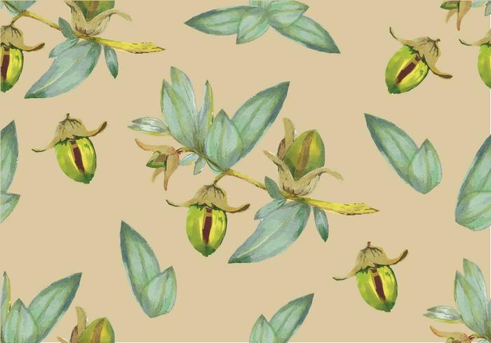 Jojoba Seamless Pattern Vector