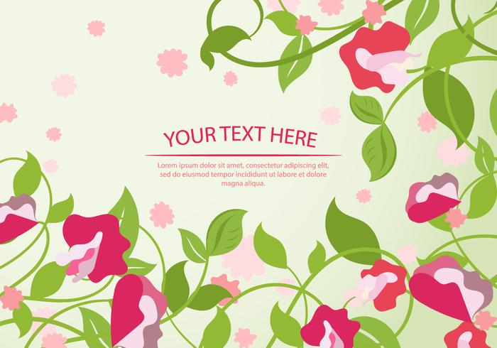 Sweet Pea Flower Background Template