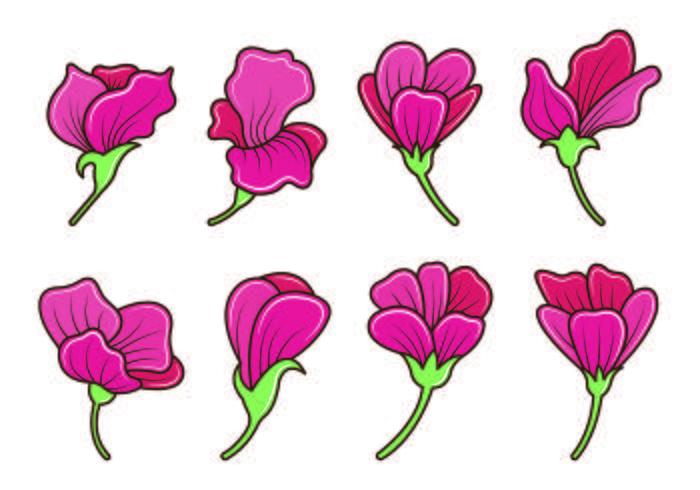 Set Of Sweet Pea Flower Vector