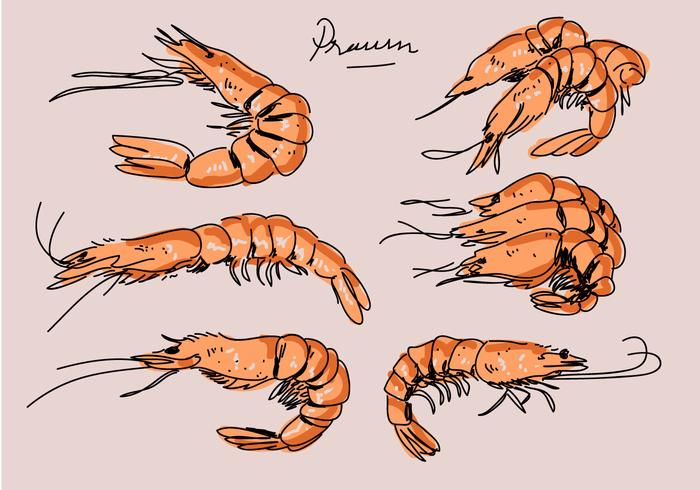 Stekt räka handdragen vektor illustration
