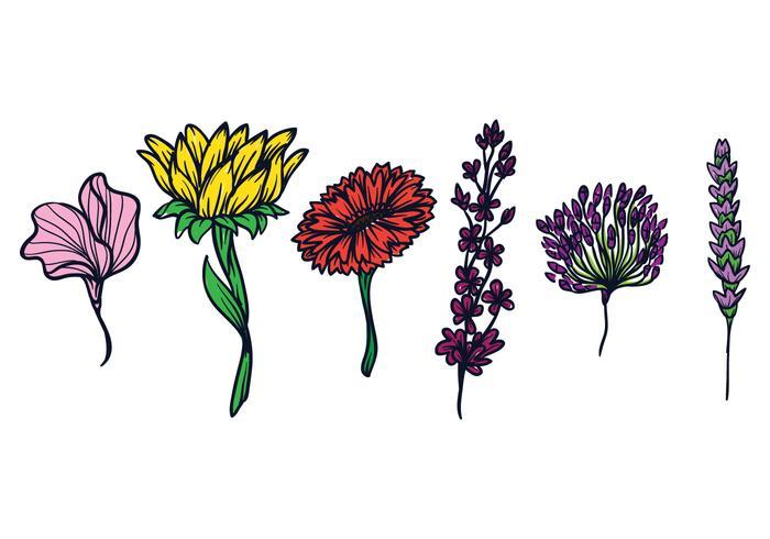 Conjunto de ilustración de flores