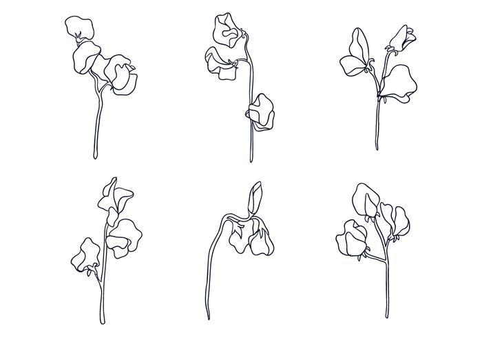 Ilustration da ervilha doce