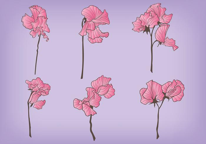Ícones de vetor de ervilha doce