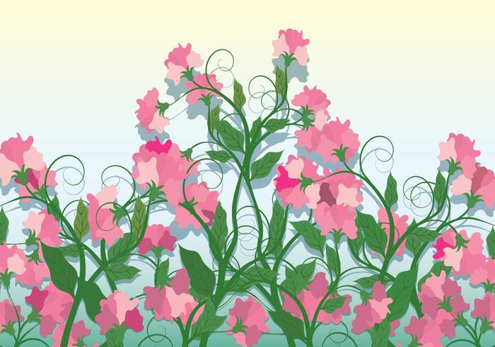 Sweet Pea Vector Background