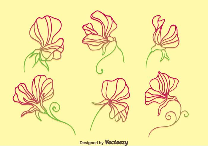 Sweet Pea Flowers Collection Vector