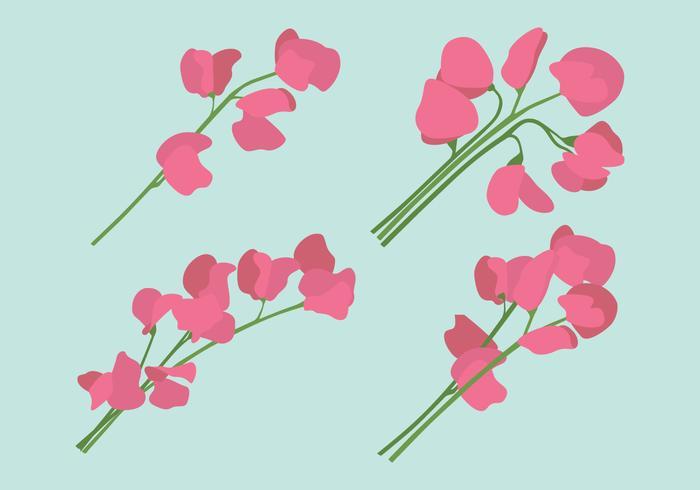 Conjunto de flores de guisante dulce