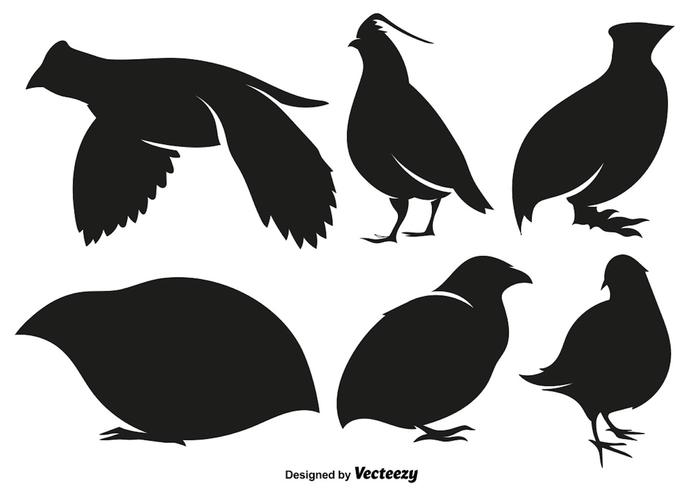 Vector Quail Vector Set