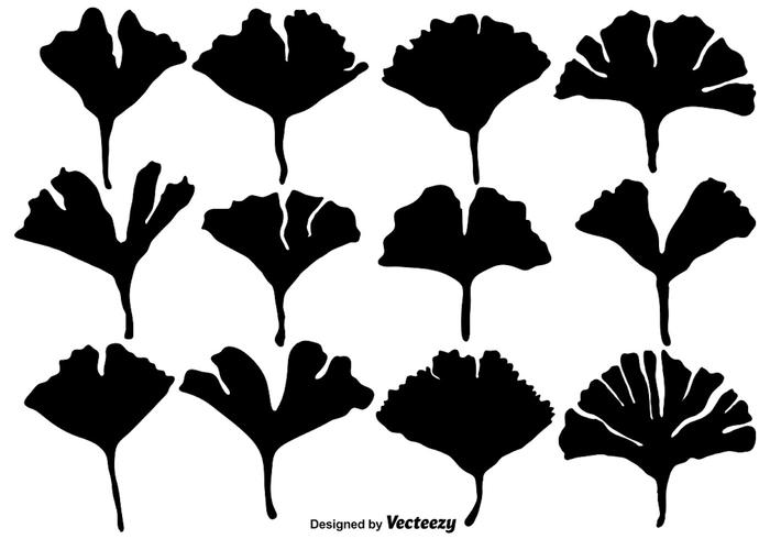 Vector Gingko Leaf Silhouettes - Set Flat Style