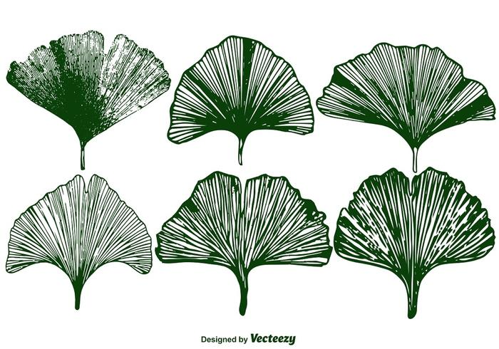 Vector Gingko Leaf Set