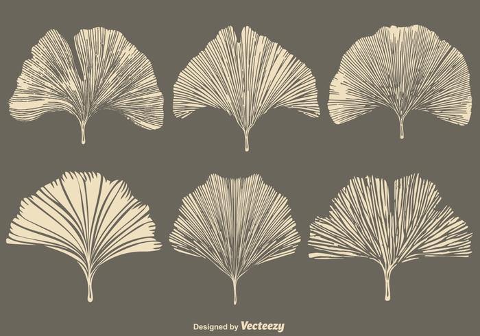 Vector Gingko Leaf - Conjunto de estilo plano