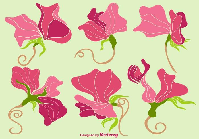 Vector Colorful Sweet Peas Flower Collection