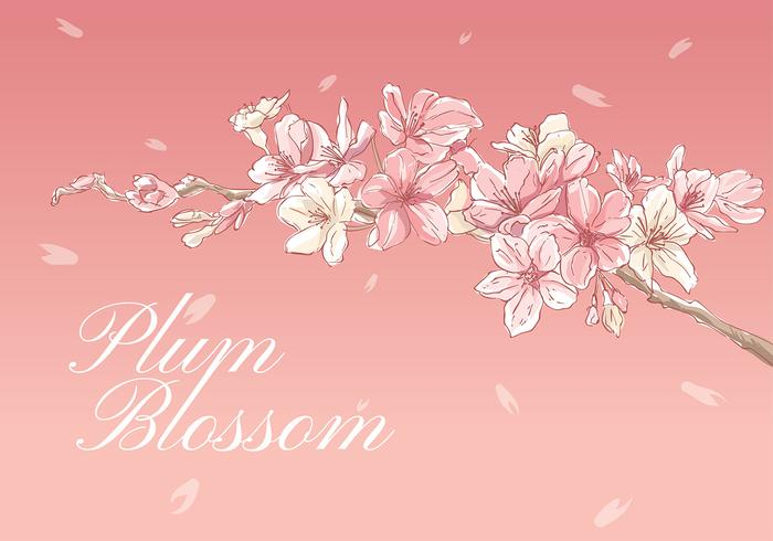 Plum Blossom Hand Drawing Vector