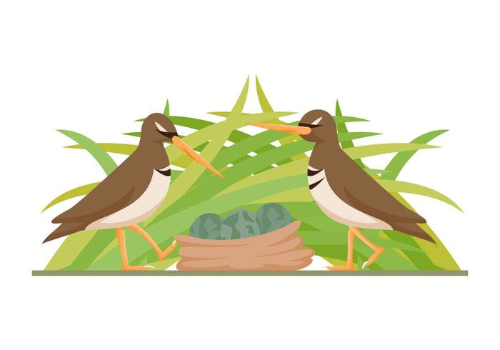 Free Outstanding Snipe Bird Vectors
