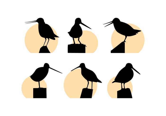 Free Outstanding Snipe Bird Vectors