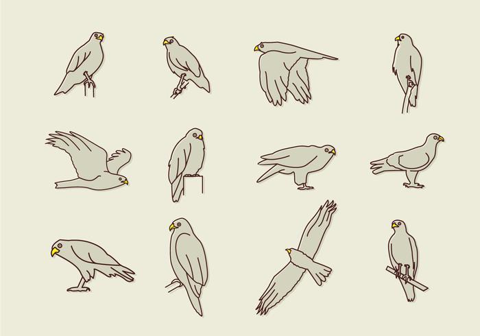 Iconos de águila de Buzzard vector