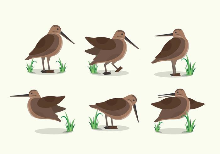 Snipe Bird habitat plat illustratie