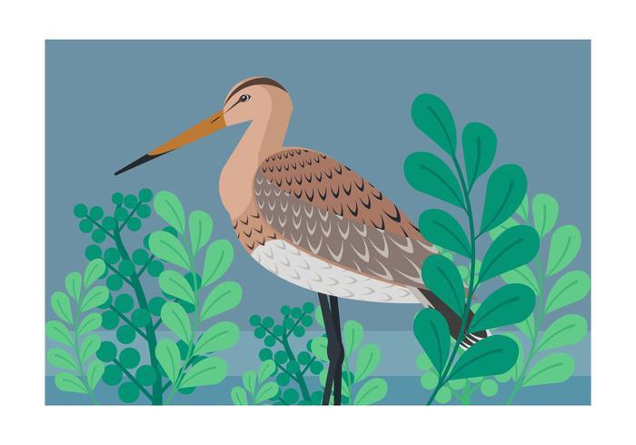 Snipe Bird Vector Illustration