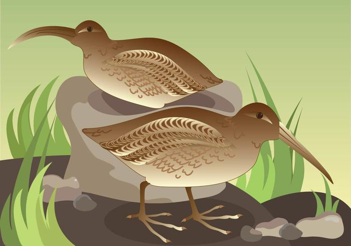 Snipe Couple Vector