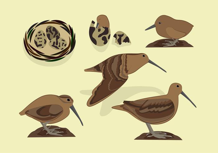 Snipe Bird Free Vector