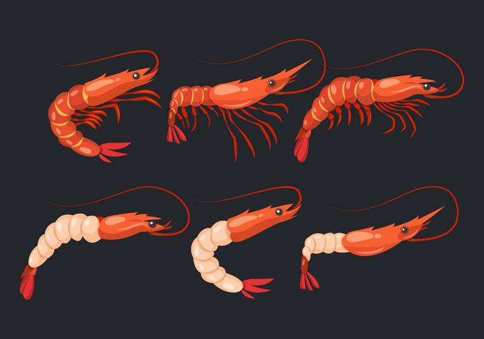 Prawn Shrimps Vector Collection