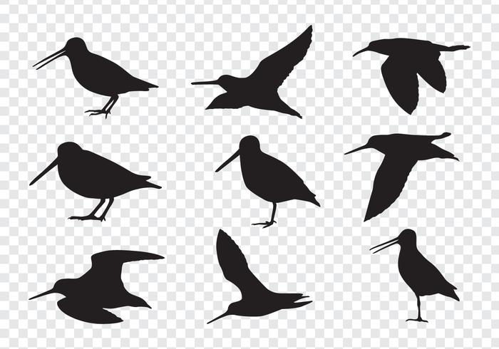 Snipe Birds Silhouettes