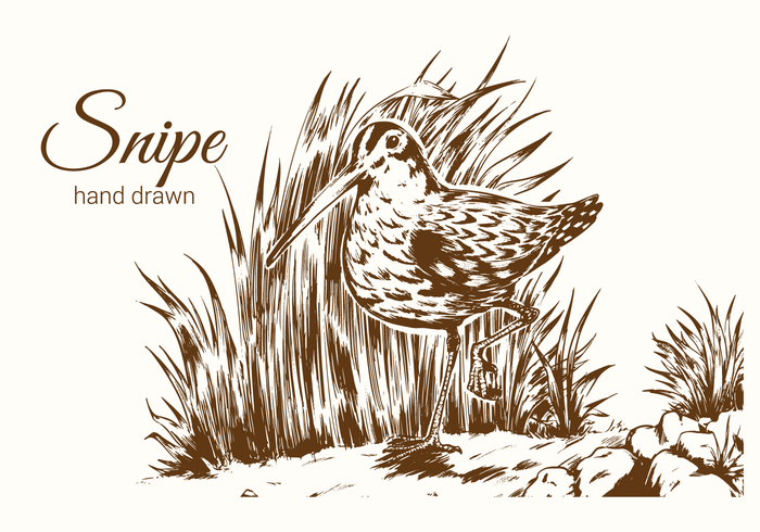 Hand Drawn Snipe Bird