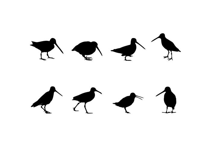 Silhouette Standing Snipe Free Vector
