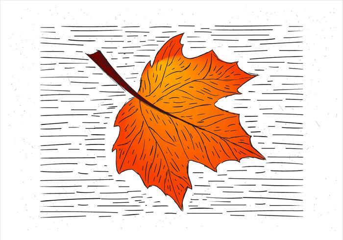 Mano libre dibujó la ilustración de la hoja del otoño