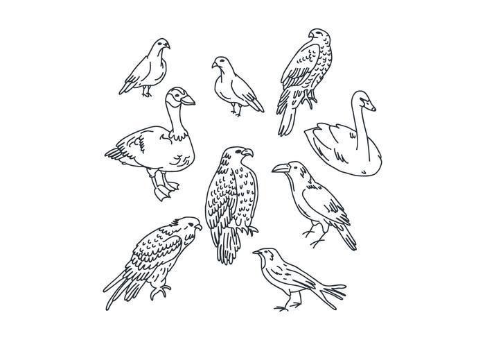 Desenhos de pássaros botânicos