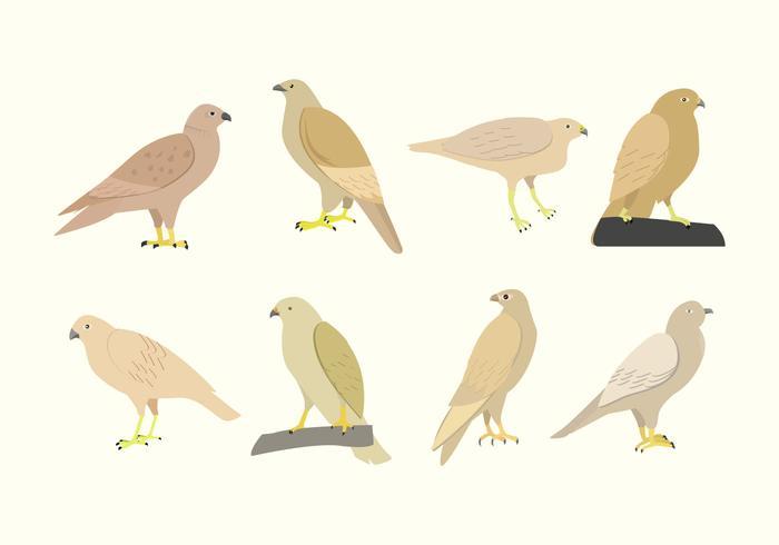 Buzzard Bird Vector