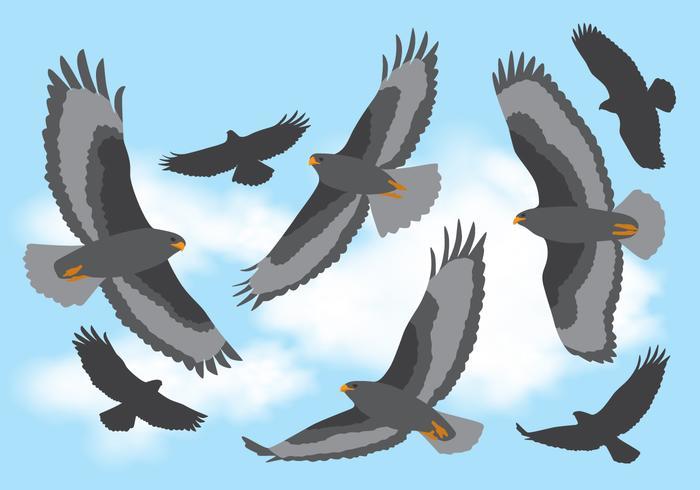 Buizerd vliegen in de lucht