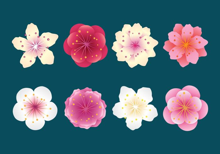 Plum Blossom Collection vector