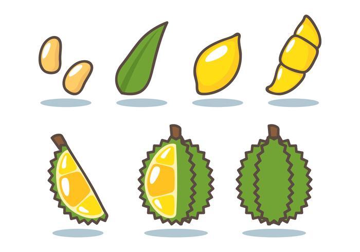 Durian Vector