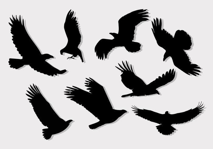 Buzzard Eagle Silhouettes Vector gratis
