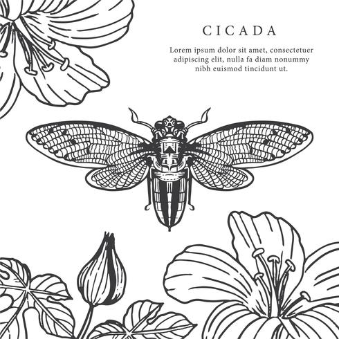 Cicada Hand Getekende Achtergrond Vector