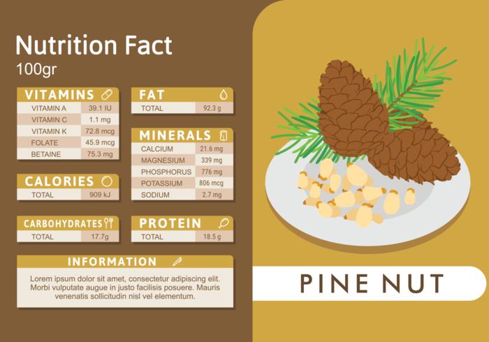 Datos Nutricionales en Pine Nut vector